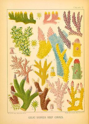 Postcard: Vintage print repro - Colorful Coral from Great Barrier Reef
