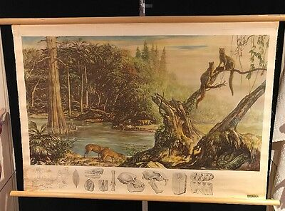 "Antique Denoyer Geppert Co. Wildlife Biology Biocraft Chart 28""X43"" Wood Rod"