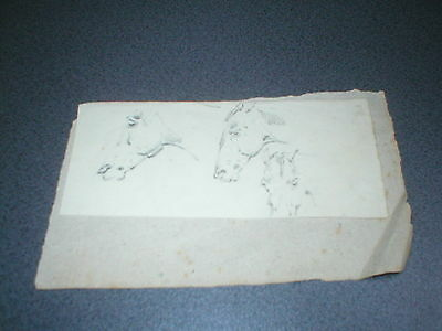 Antique Pencil Drawing of horses - three horses heads - 19th Century