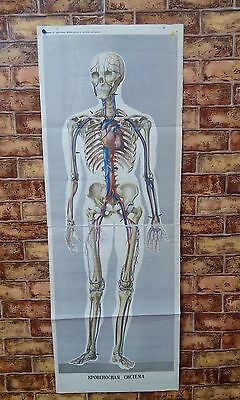 Vintage Russian human anatomy anatomical medical poster real on fabric 1965y