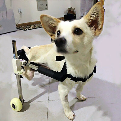 """Stainless Steel 10"""" Cart Height Pet Dog Wheelchair Walk For Handicapped Doggie"""