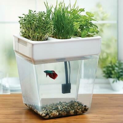 Self-Cleaning Fish Tank Herb Water Garden v2.0 | water aquaponics betta grow hom