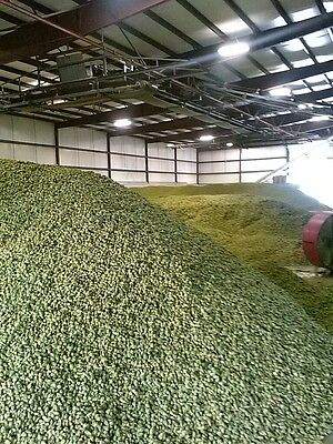 Fresh Hops!  Cascade plus Bundle 2 pounds total. Your Choice!