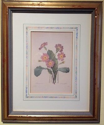 Rare Limited Ed' Print Natural History Museum Fairest Flowers Redoute - Primrose