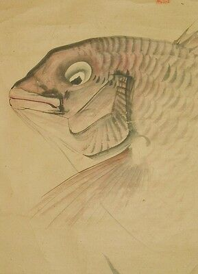 Japanese Painting red snapper Hanging Scroll Picture Antique Japan ink art a732