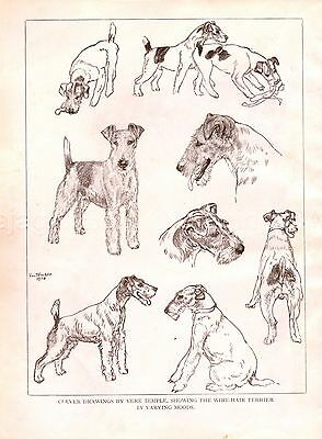 DOG Fox Terrier Wire Haired Character Studies, 1930s Art Print by Vere Temple
