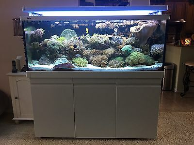 Red Sea Max S-650 Series TANK WITH HOOD LIGHTING ONLY S650 GREAT DEAL
