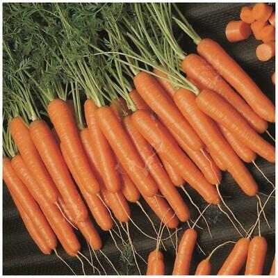 "Carrot ""Scarlet Nantes Organic"" seeds 