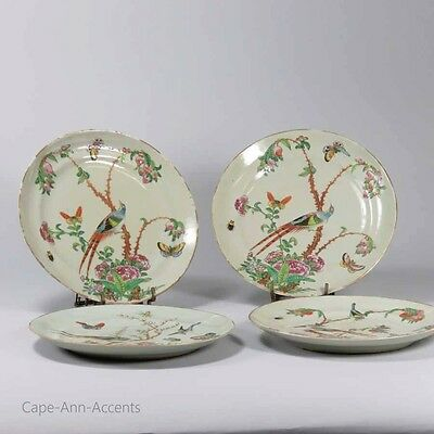 19th.c Chinese Famille Rose Celadon Plates Lot of 4, Birds, Floral Scenes # 4