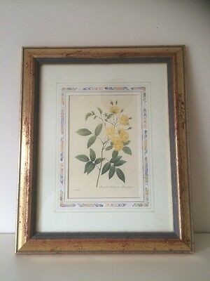 Natural History Museum Yellow Roses Pierre Joseph Redoute Limited Edition #467