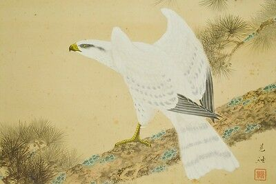 Hanging Scroll Japanese Painting White Hawk Picture Pine Antique Japan Art b339