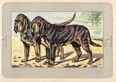 DOG OTTERHOUND, Extremely Rare Antique 100-Year-Old French Dog Print