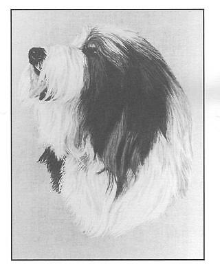 Bearded Collie Note Cards by Chris Lewis Brown - Pk of 6 cards
