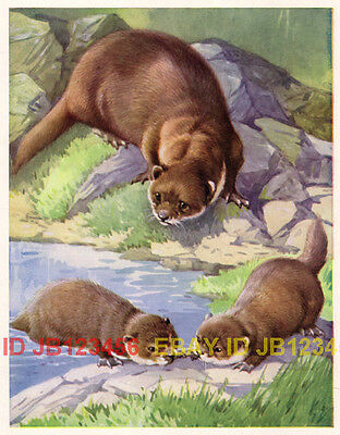 OTTER Family Playing, 1930s Vintage CHILDREN's Print