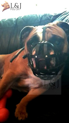 Leather Dog Muzzle for English Bulldog and Other dogs with short snout