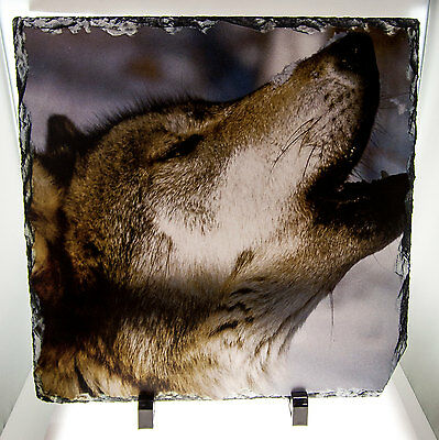 Howling Wolf Photo Profile On Natural Slate - 12x12