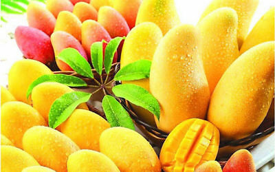 Bonsai seeds Very Sweet Gold Mango Rare Tropical Juicy Fresh Fruit birthday gift