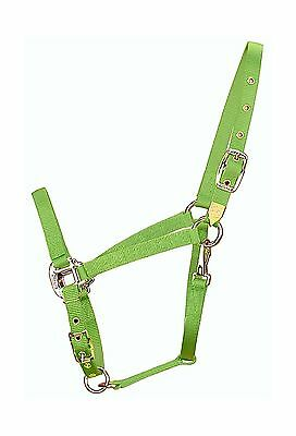 Hamilton 8DAS AVLI 3/4-Inch Nylon Arabian Horse Halter for 800 to 1100-Po... New