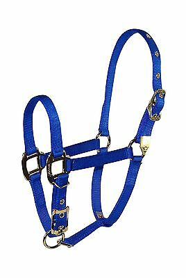 Hamilton 8DA AVBL 3/4-Inch Nylon Adjustable Arabian Horse Halter for 800 ... New