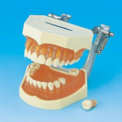 Dental Models Tooth Extraction Training Model 9 Sold, 15 In Stock