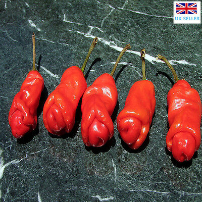 Willy Chilli 20 Seeds,Penis Chili, Peter Pepper Chilli Seeds