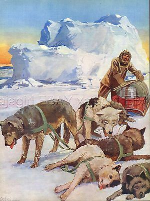DOG Alaskan Malamute Sled Dogs, Beautiful 1930s Color Linen Print by G. S. Dixon