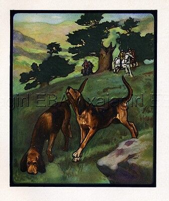 DOG Bloodhounds Trailing by Edwin Noble, Quality 1910 Antique Print