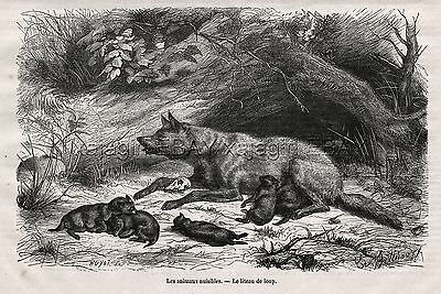 """Wolf Mother & Litter of Pups, """"Nuisance Animals,"""" 1870s Antique Engraving Print"""