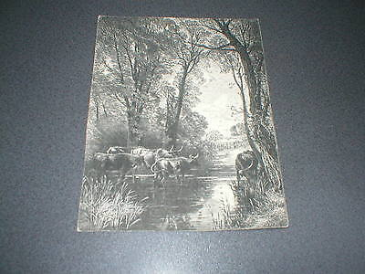 Highland Cattle, Antique black and white engraving, Longhorn cattle