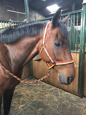 3 Stripe Horse Headcollar Adjustable Nylon Halter with Matching Lead Rope FREE