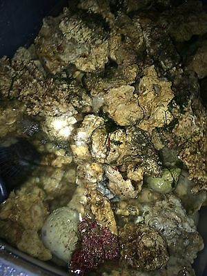 1.5Kg Live Rock Rubble For Marine Saltwater Reef Fish Tank Matured 2 Years+!
