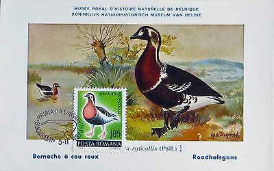 "Carte Maximum ""roumanie ""   Oiseaux"