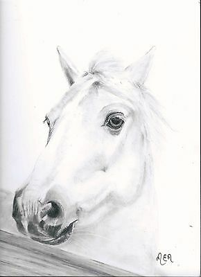 original drawing  of  a white horse