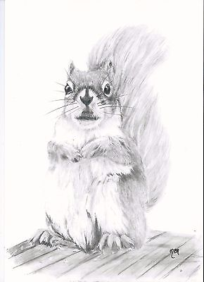 Original drawing of  a squirrel