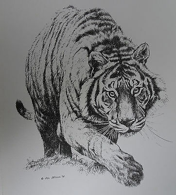 Jan Jellins Pen & Ink reproduction print Wild Cats #97 Tiger--ENDANGERED