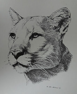 Jan Jellins Pen & Ink reproduction print Wild Cats #95 Cougar--ENDANGERED