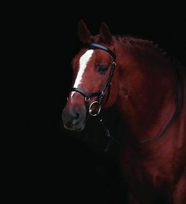 Original Horseware Rambo Micklem Competition Bridle/Trense, ohne Zügel