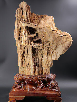 Bonsai Suiseki PETRIFIED WOOD Display Specimen Unpolished display stone collect