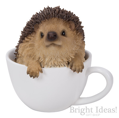 Vivid Arts - PET PALS HEDGEHOG IN TEACUP & BOX - Baby Hedgehog