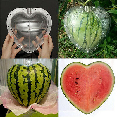 1pc Garden Fruit Vegetable Heart Shape Cucumber Mold Growth Forming Tool
