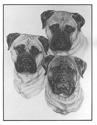 Bullmastiff Note Cards by Chris Lewis Brown - Pk of 6 cards