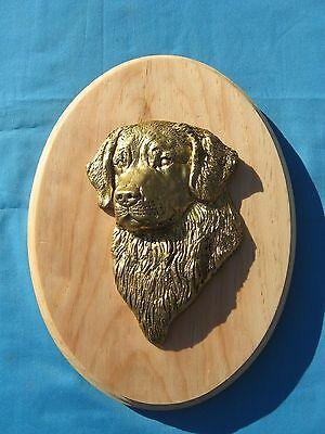 Golden Retriever 3D Head Study Oval Wall Plaque by Dannyquest