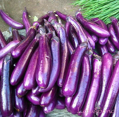 Liveseeds - Purple Long Eggplant Seed Garden Edible Vegetable 10 Finest  Seeds