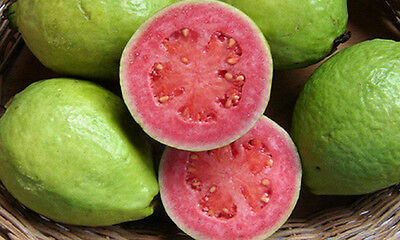 Liveseeds - Giant red sweet guava fruit 5 finest seeds