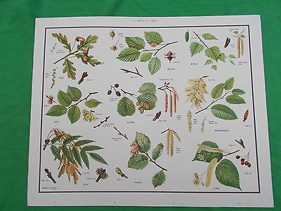MACMILLAN'S POSTER TREES  etc No 41  NATURE/SCIENCE