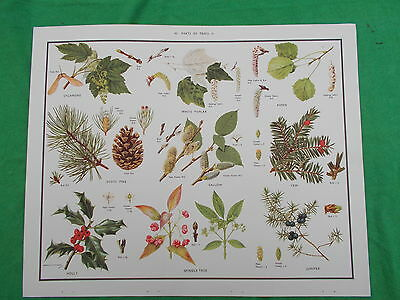 MACMILLAN'S POSTER TREES  etc No 42  NATURE/SCIENCE