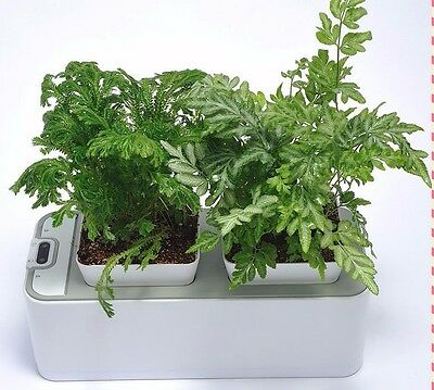 Hydroponic Herb Garden Automated