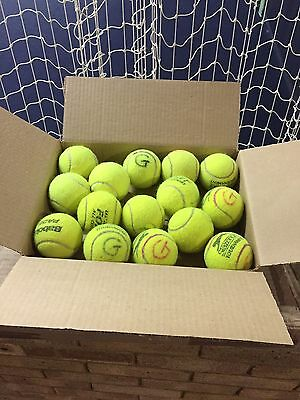 15 Used Premium Tennis Balls -Ideal For Dogs Used Only Indoors by a Tennis Coach