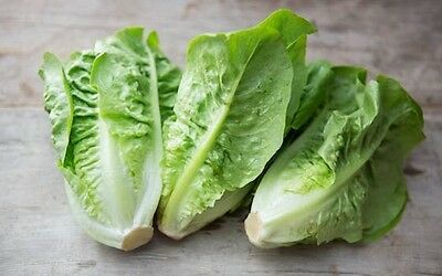 Little Gem Lettuce - 200 Finest Seeds UK Vegetable
