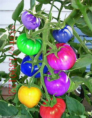 LOCAL AUSSIE STOCK - Rainbow Tomato, Vegetable Fruit Seeds ~10x FREE SHIPPING